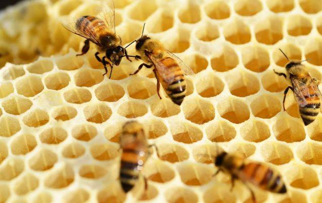 Alveole d'une ruche avec abeilles